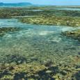 春、海藻が繁茂する海草場の風景