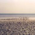 浜辺に舞い降りたシギ・チドリたち